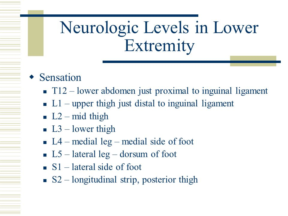 Neurologic Levels in Lower Extremity  Sensation T12 – lower abdomen just proximal to inguinal ligament L1 – upper thigh just distal to inguinal ligament L2 – mid thigh L3 – lower thigh L4 – medial leg – medial side of foot L5 – lateral leg – dorsum of foot S1 – lateral side of foot S2 – longitudinal strip, posterior thigh