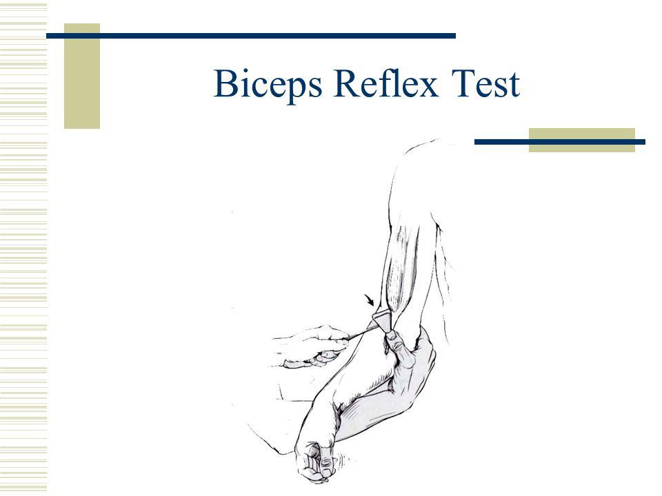Biceps Reflex Test