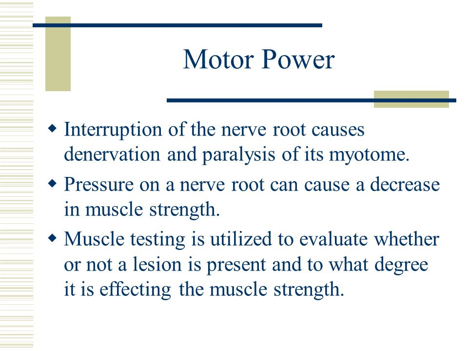 Motor Power  Interruption of the nerve root causes denervation and paralysis of its myotome.
