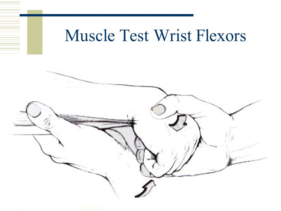 Muscle Test Wrist Flexors