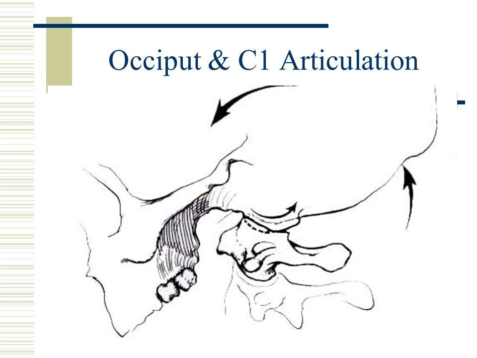 Occiput & C1 Articulation