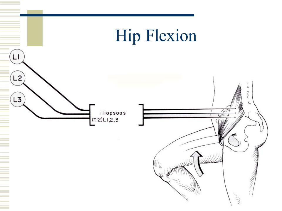 Hip Flexion