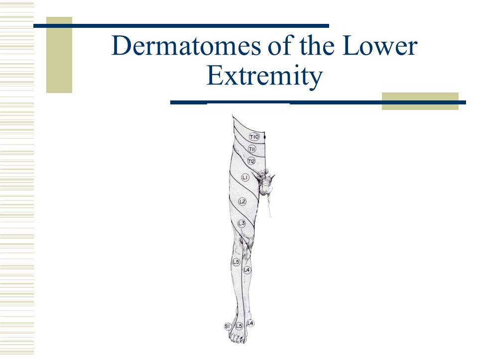 Dermatomes of the Lower Extremity