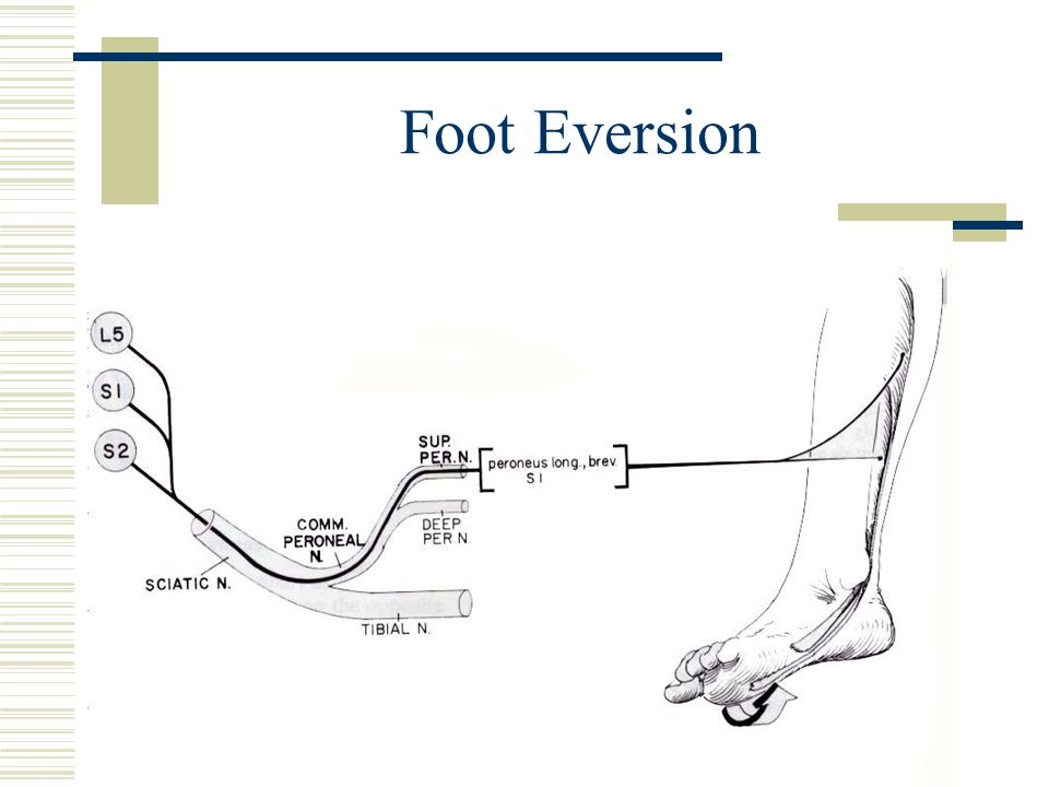 Foot Eversion
