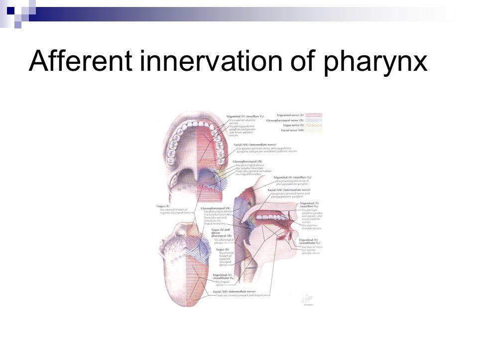 Afferent innervation of pharynx