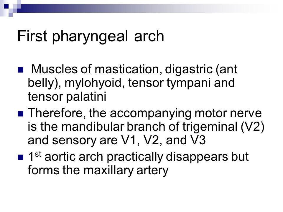 First pharyngeal arch Muscles of mastication, digastric (ant belly), mylohyoid, tensor tympani and tensor palatini Therefore, the accompanying motor n