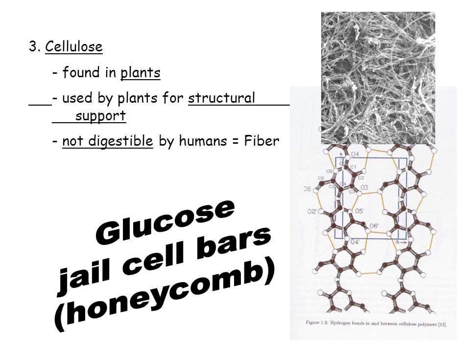 3. Cellulose - found in plants - used by plants for structural support - not digestible by humans = Fiber