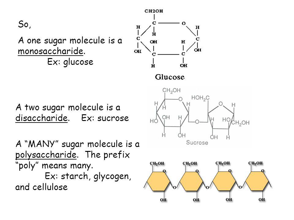 """So, A one sugar molecule is a monosaccharide. Ex: glucose A two sugar molecule is a disaccharide. Ex: sucrose A """"MANY"""" sugar molecule is a polysacchar"""