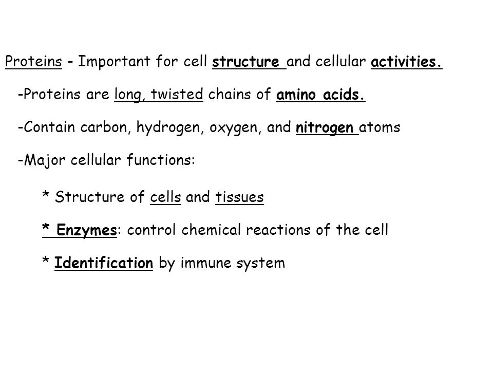 Proteins - Important for cell structure and cellular activities. -Proteins are long, twisted chains of amino acids. -Contain carbon, hydrogen, oxygen,