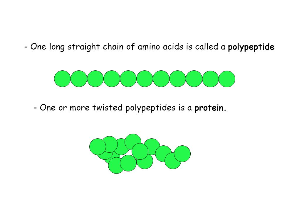 - One long straight chain of amino acids is called a polypeptide - One or more twisted polypeptides is a protein.