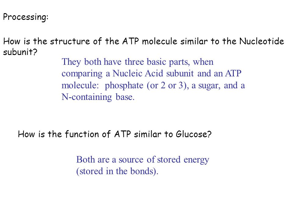 Processing: How is the function of ATP similar to Glucose? How is the structure of the ATP molecule similar to the Nucleotide subunit? They both have