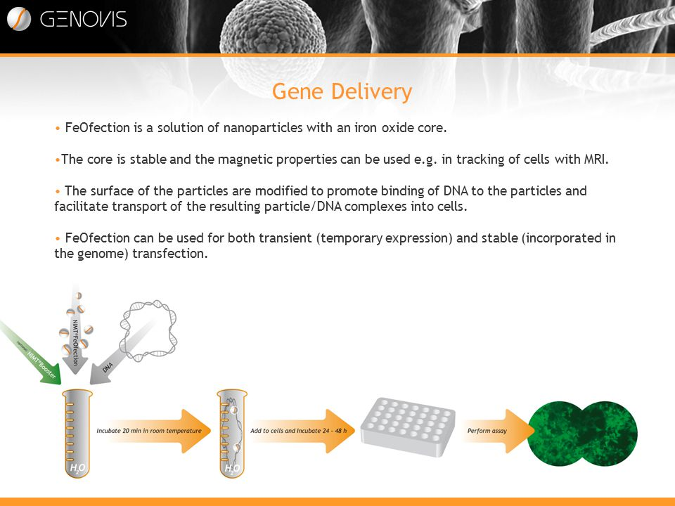 Gene Delivery Att tillföra en ny gen i en cell FeOfection is a solution of nanoparticles with an iron oxide core.