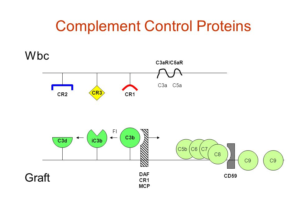 CD59 DAF CR1 MCP C3b iC3b C3d CR3 CR2CR1 Graft Wbc FI C5bC6C7 C8 C9 C3aC5a C3aR/C5aR Complement Control Proteins