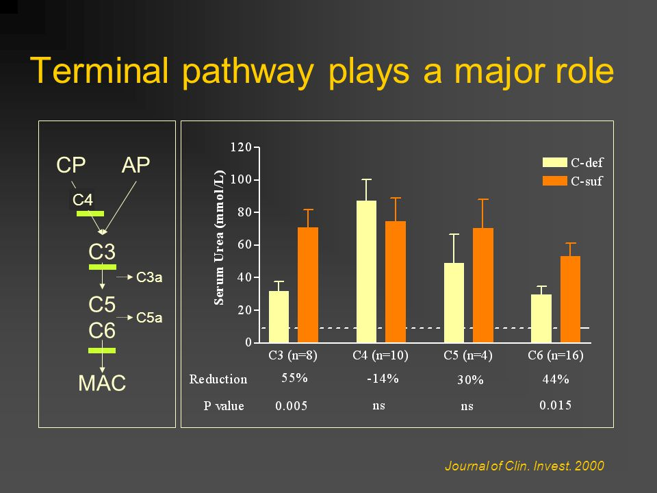 Terminal pathway plays a major role C3 C5 C6 MAC CPAP Journal of Clin. Invest. 2000 C3a C5a C4