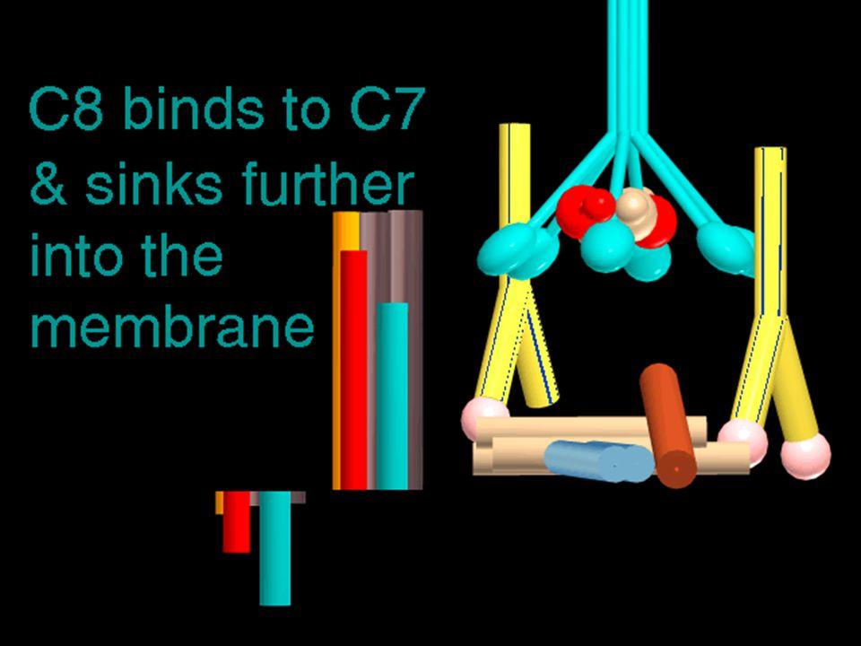 43 4/14/2015 C8 in membrane