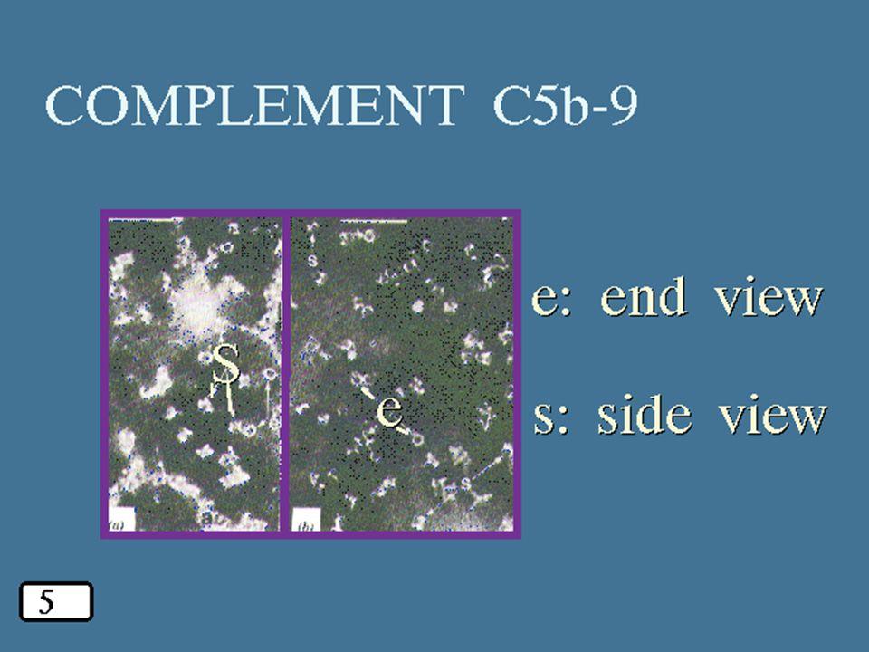 46 4/14/2015 C5b-9 EM
