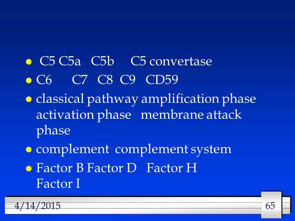 65 4/14/2015 l C5 C5a C5b C5 convertase l C6 C7 C8 C9 CD59 l classical pathway amplification phase activation phase membrane attack phase l complement complement system l Factor B Factor D Factor H Factor I