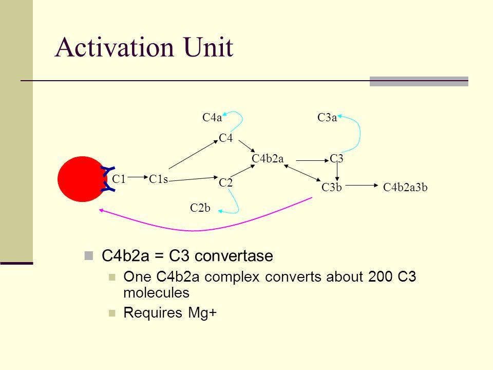 Activation Unit C4b2a = C3 convertase One C4b2a complex converts about 200 C3 molecules Requires Mg+ C1 Y Y C1s C4 C2 C4a C2b C4b2aC3 C3a C3bC4b2a3b
