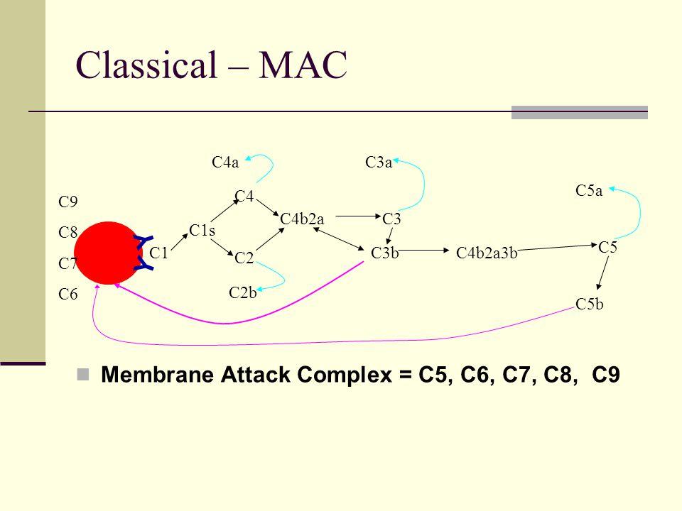 Classical – MAC Membrane Attack Complex = C5, C6, C7, C8, C9 C1 Y Y C1s C4 C2 C4a C2b C4b2aC3 C3a C3bC4b2a3b C5 C5a C5b C9 C8 C7 C6