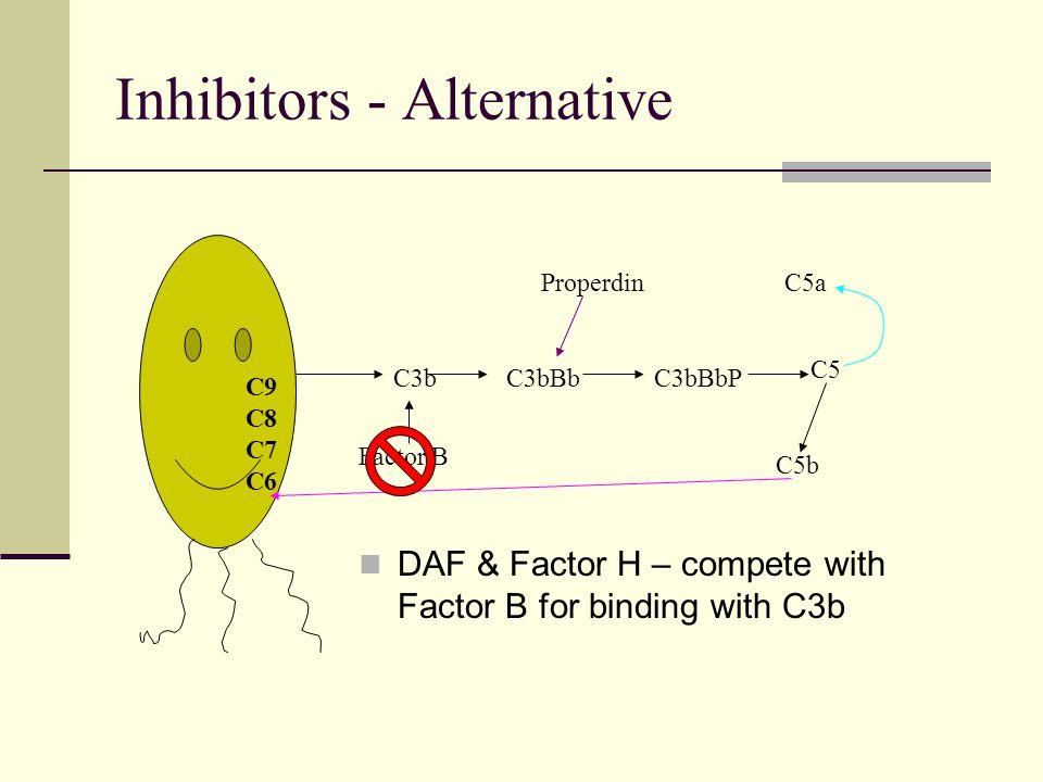 Inhibitors - Alternative DAF & Factor H – compete with Factor B for binding with C3b C3b Factor B C3bBb Properdin C3bBbP C5a C5 C5b C9 C8 C7 C6