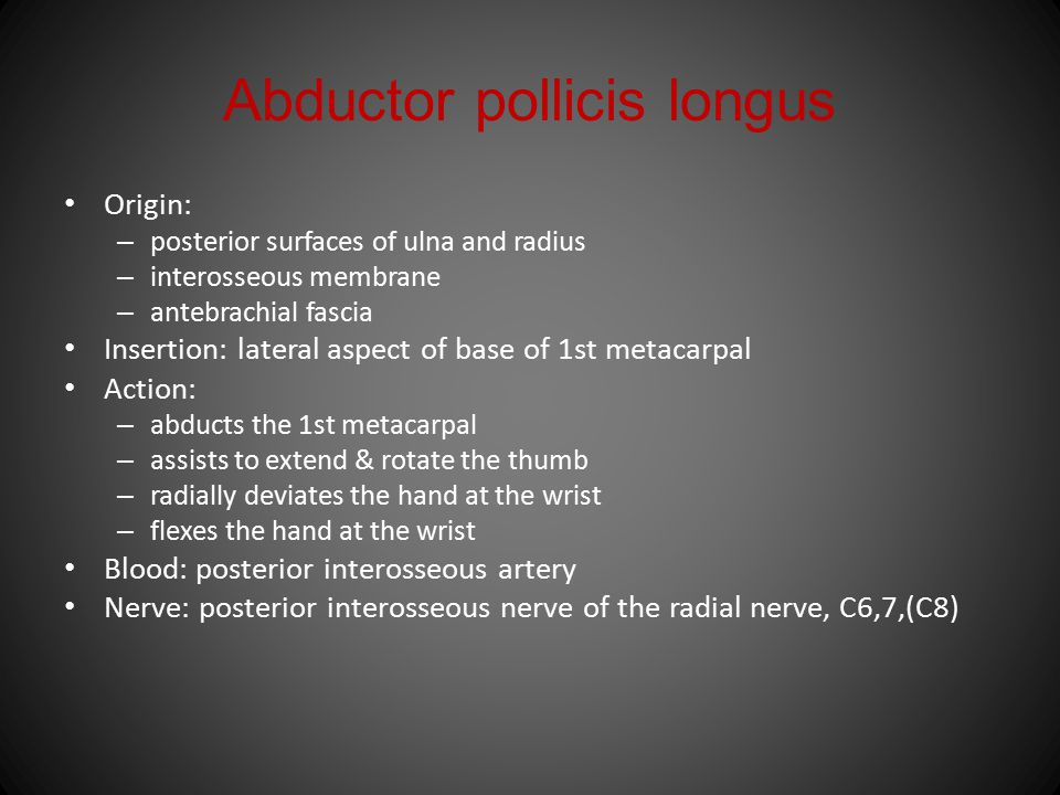 Abductor pollicis longus Origin: – posterior surfaces of ulna and radius – interosseous membrane – antebrachial fascia Insertion: lateral aspect of ba