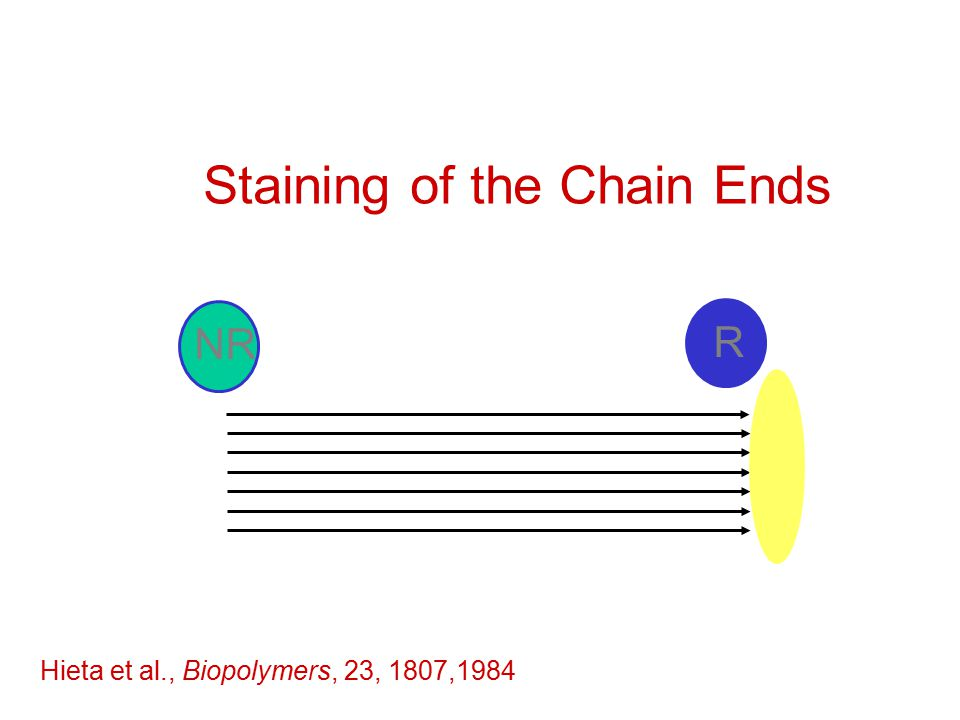 Staining of the Chain Ends R NR Hieta et al., Biopolymers, 23, 1807,1984