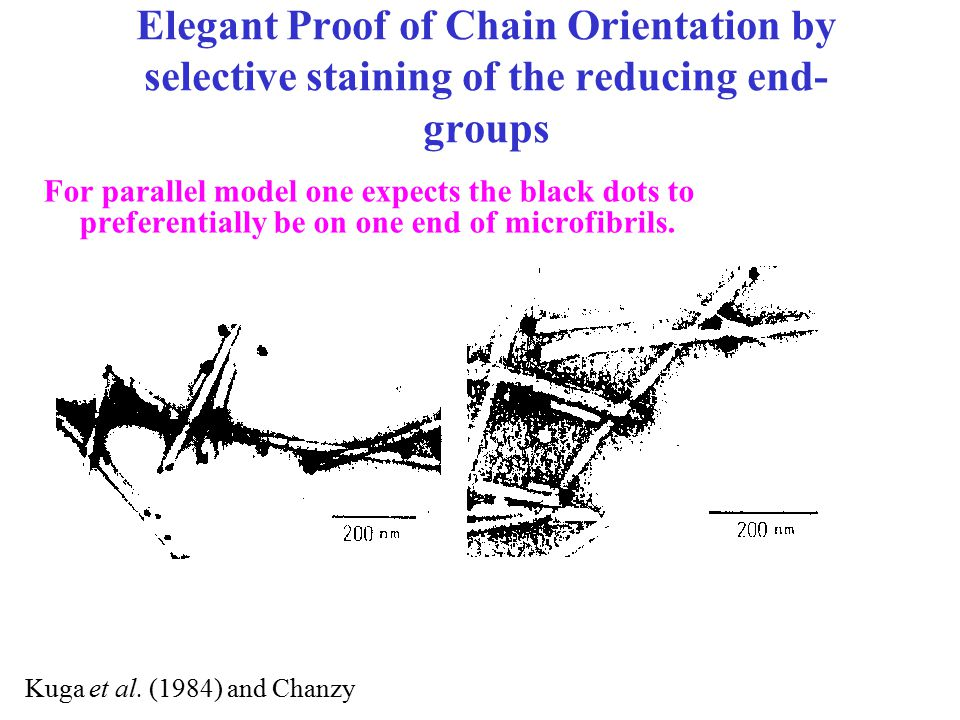 Elegant Proof of Chain Orientation by selective staining of the reducing end- groups Kuga et al. (1984) and Chanzy For parallel model one expects the