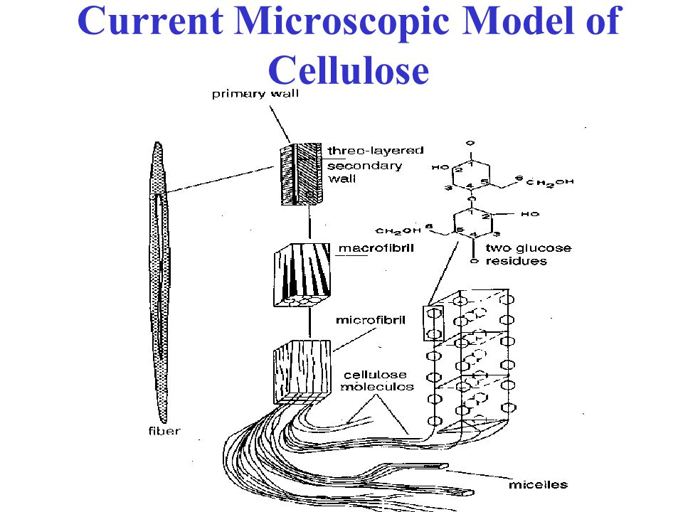 Current Microscopic Model of Cellulose
