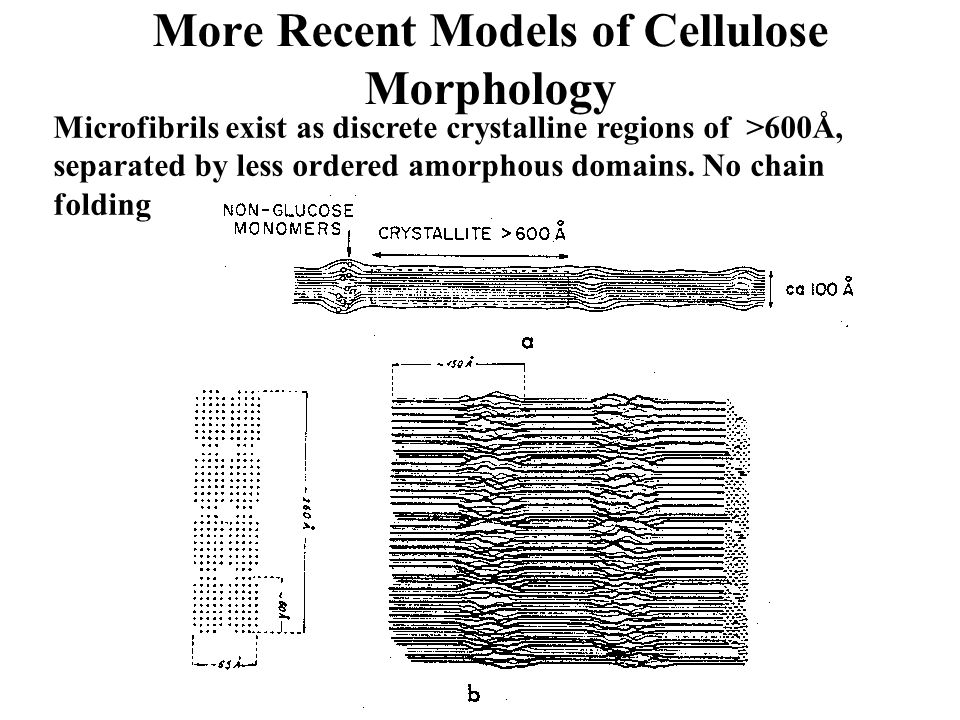 More Recent Models of Cellulose Morphology Microfibrils exist as discrete crystalline regions of >600Å, separated by less ordered amorphous domains. N
