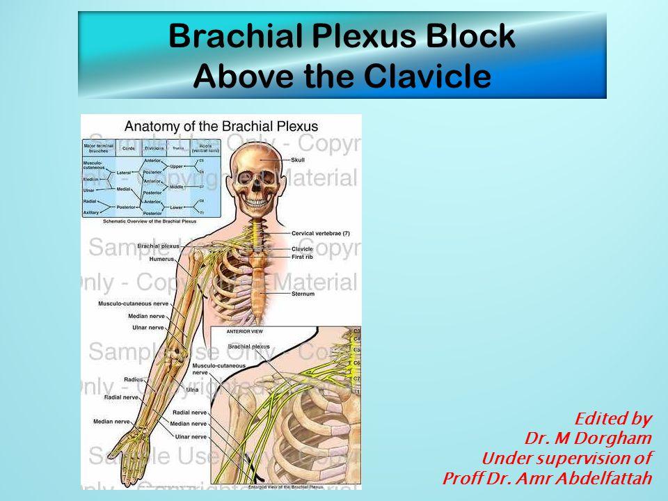 Surface anatomy 1 = Phrenic nerve 2 = Brachial plexus 3 = Dorsal scapular nerve (to rhomboid muscles) 4 = Nerve to levator scapulae