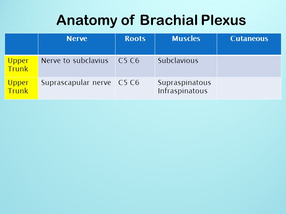 Anatomy of Brachial Plexus NerveRootsMusclesCutaneous Lateral cord Lateral pectoral nerve C5 C6 C7Pectoralis Major By communication with Medial Pectoral Nerve Lateral cord Musculocutaneous nerve C5 C6 C7Coracobrachialis Brachialis Biceps brachii Become the Lateral cutaneous nerve of forearm Lateral cord Lateral root of median nerve C5 C6 C7Fibres of Median nerve