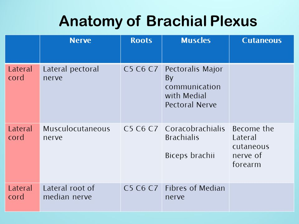 Anatomy of Brachial Plexus NerveRootsMusclesCutaneous Lateral cord Lateral pectoral nerve C5 C6 C7Pectoralis Major By communication with Medial Pector