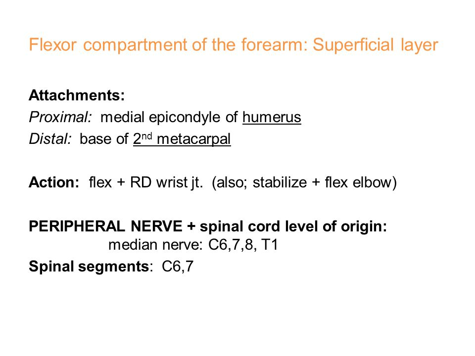 Extensor carpi ulnaris (ECU)