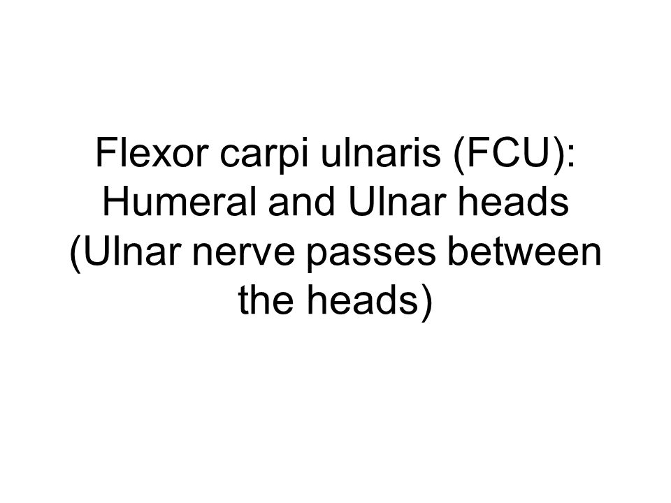 Extensor compartment of the forearm: Superficial layer Attachments: Proximal: lateral supracondylar ridge of humerus Distal: base of 2 nd metacarpal Action: extend + RD wrist (synergist with FCR to get pure RD) PERIPHERAL NERVE + spinal cord level of origin: radial nerve: C5-T1 Spinal segments: C6,7