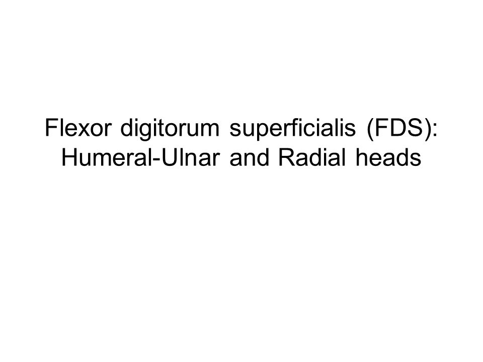 Flexor compartment of the forearm: Intermediate layer Attachments: Proximal: Humeral-Ulnar head: medial epicondyle of humerus + coronoid process of ulna Radial head: proximal radius Distal: shaft of MIDDLE phalanx of digits 2-5 (note the split tendon) Action: flex PIP jt.