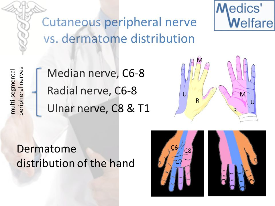 Cutaneous peripheral nerve vs. dermatome distribution Median nerve, C6-8 Radial nerve, C6-8 Ulnar nerve, C8 & T1 M U R R U M multi-segmental periphera