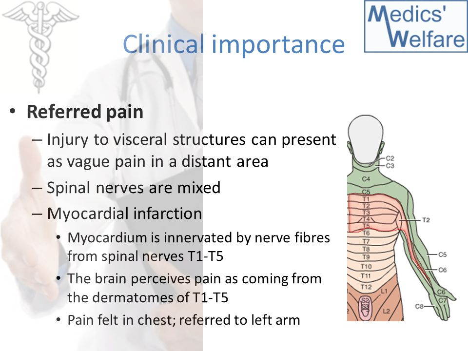 Clinical importance Referred pain – Injury to visceral structures can present as vague pain in a distant area – Spinal nerves are mixed – Myocardial i