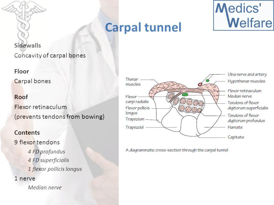 Carpal tunnel Sidewalls Concavity of carpal bones Floor Carpal bones Roof Flexor retinaculum (prevents tendons from bowing) Contents 9 flexor tendons