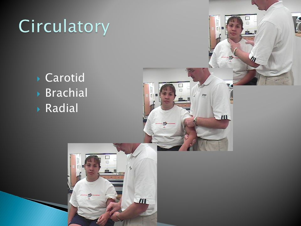  Carotid  Brachial  Radial