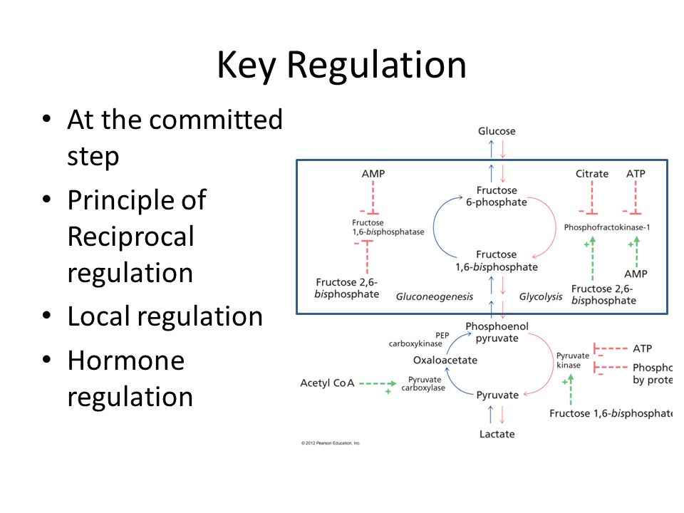 Key Regulation At the committed step Principle of Reciprocal regulation Local regulation Hormone regulation