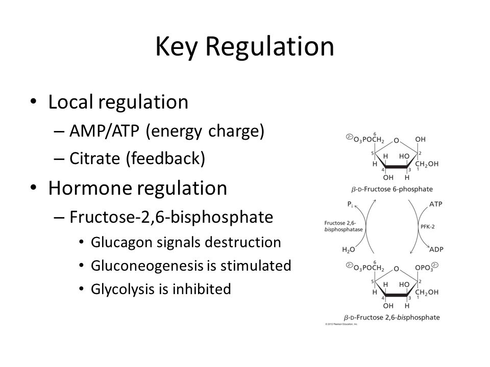 Key Regulation Local regulation – AMP/ATP (energy charge) – Citrate (feedback) Hormone regulation – Fructose-2,6-bisphosphate Glucagon signals destruction Gluconeogenesis is stimulated Glycolysis is inhibited