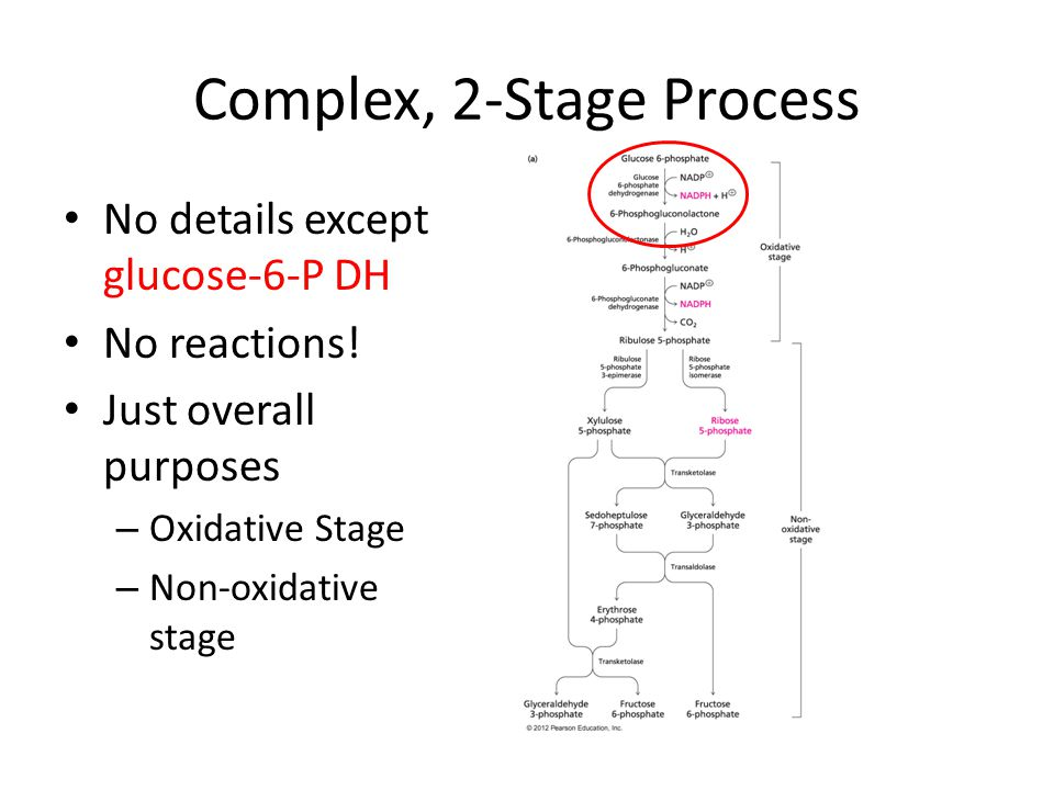Complex, 2-Stage Process No details except glucose-6-P DH No reactions.