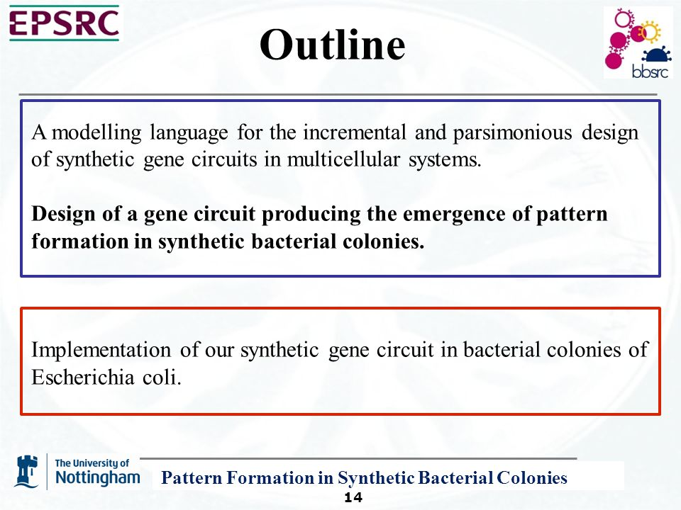 A P System Modelling Framework for Systems and Synthetic Biology 14 Outline A modelling language for the incremental and parsimonious design of synthetic gene circuits in multicellular systems.