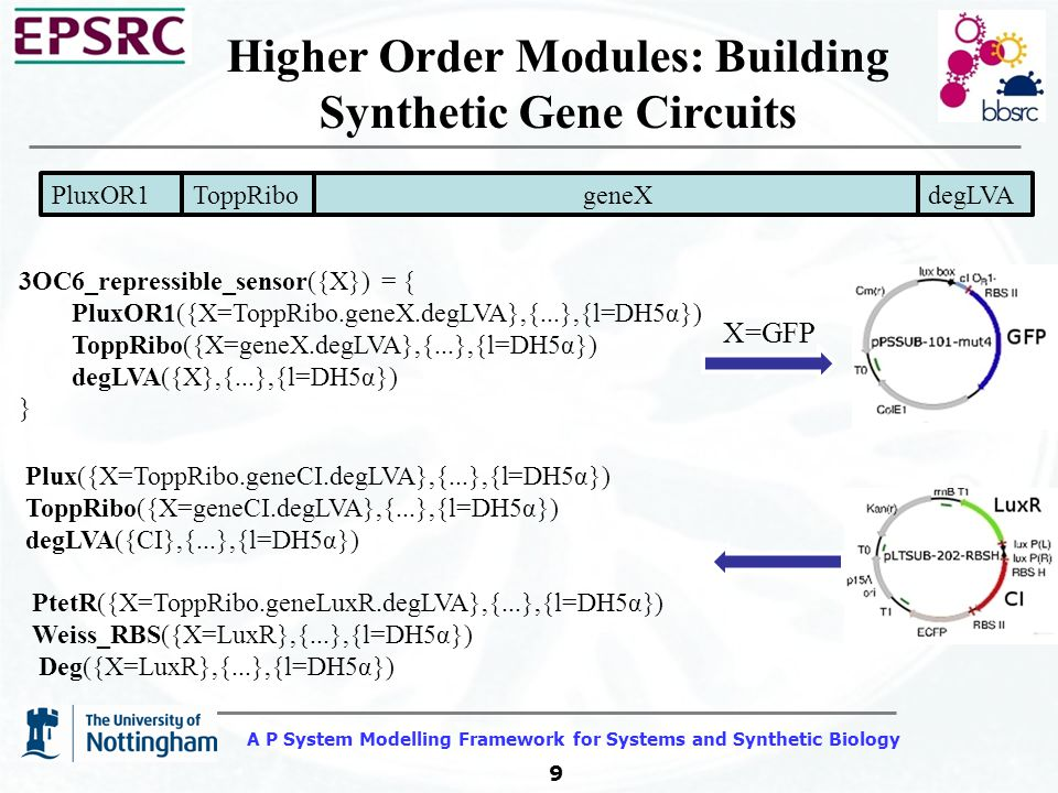A P System Modelling Framework for Systems and Synthetic Biology 9 Higher Order Modules: Building Synthetic Gene Circuits PluxOR1 geneXToppRibodegLVA ACCTGTAGGATCGTACAGGTTTACGCAA GAAATGGTTTGTATAGTCGAATACCTCTG GCGGTGATAGGTGATACCAGCATCGTCT TGATGCCCTTGGCAGCACCCCGCTGCAA GACAACAAGATG GTG....