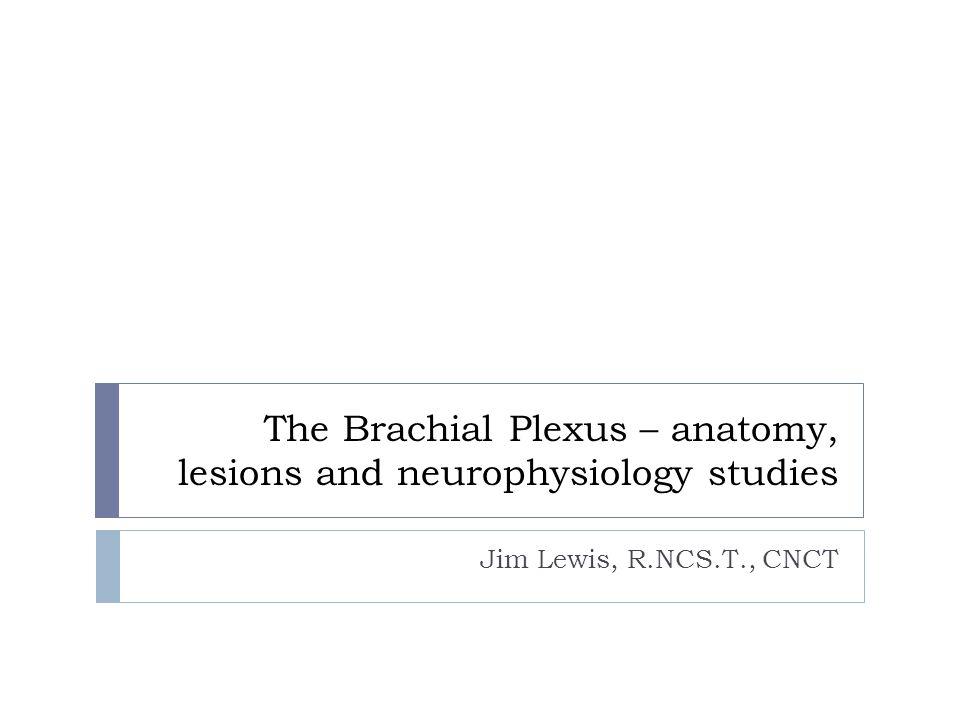 The Brachial Plexus – anatomy, lesions and neurophysiology studies Jim Lewis, R.NCS.T., CNCT