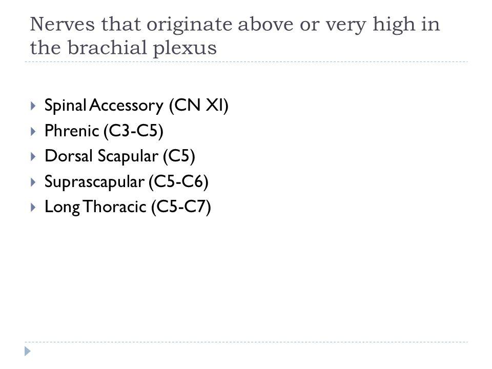  Spinal Accessory (CN XI)  Phrenic (C3-C5)  Dorsal Scapular (C5)  Suprascapular (C5-C6)  Long Thoracic (C5-C7) Nerves that originate above or ver