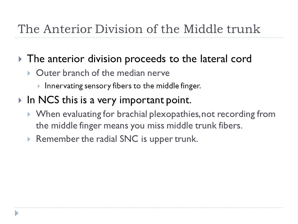 The Anterior Division of the Middle trunk  The anterior division proceeds to the lateral cord  Outer branch of the median nerve  Innervating sensor