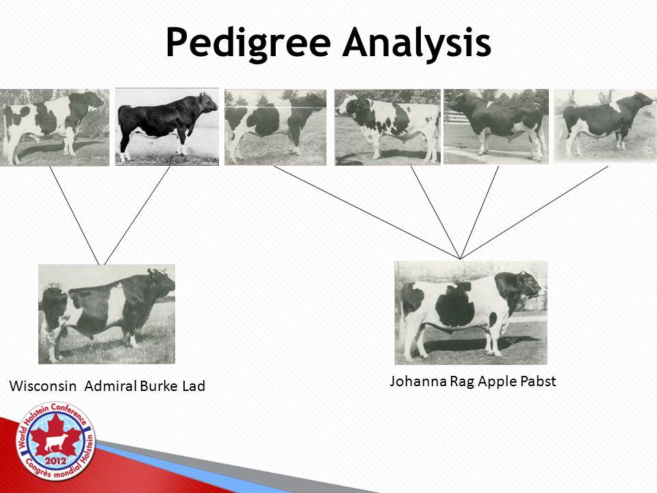 Pedigree Analysis Wisconsin Admiral Burke Lad Johanna Rag Apple Pabst