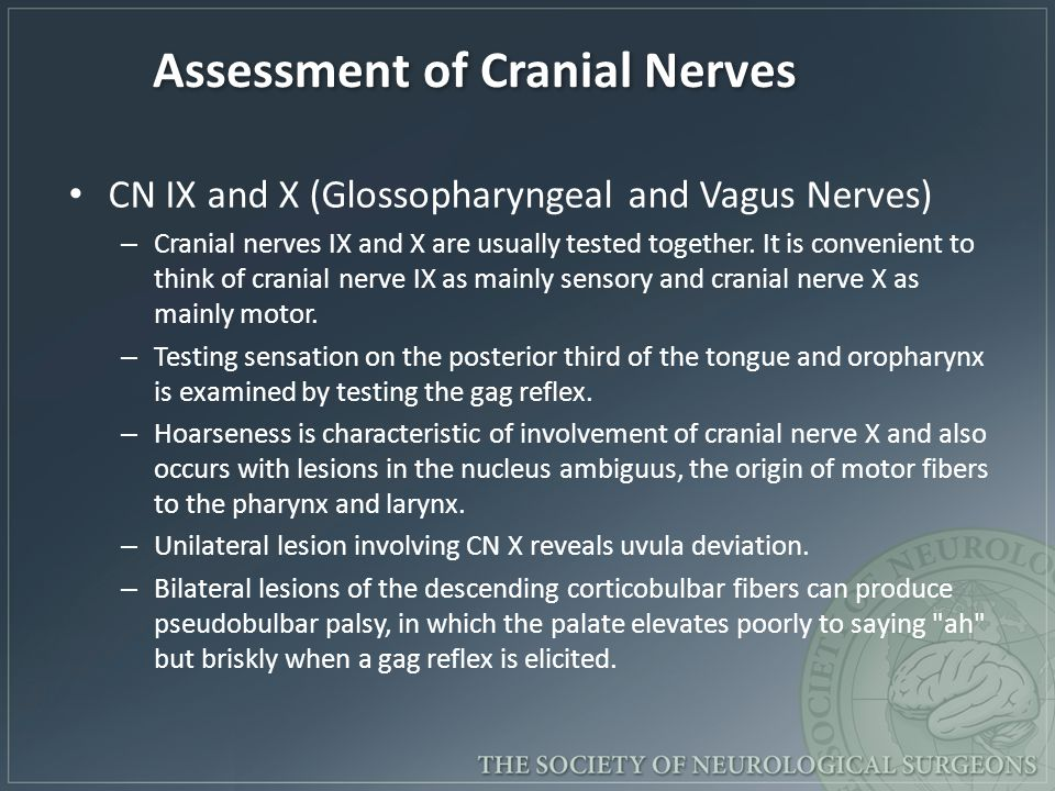 Assessment of Cranial Nerves CN IX and X (Glossopharyngeal and Vagus Nerves) – Cranial nerves IX and X are usually tested together. It is convenient t