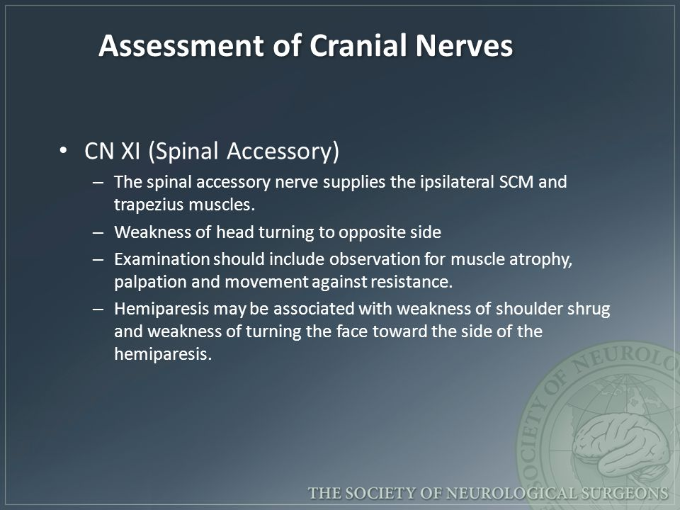 Assessment of Cranial Nerves CN XI (Spinal Accessory) – The spinal accessory nerve supplies the ipsilateral SCM and trapezius muscles.
